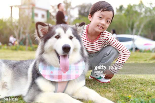 little boy with alaskan malamute - malamute stock pictures, royalty-free photos & images
