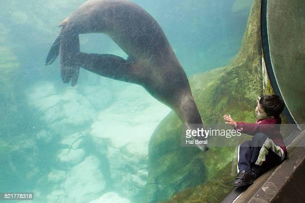 Little boy with aquarium Sea Lion
