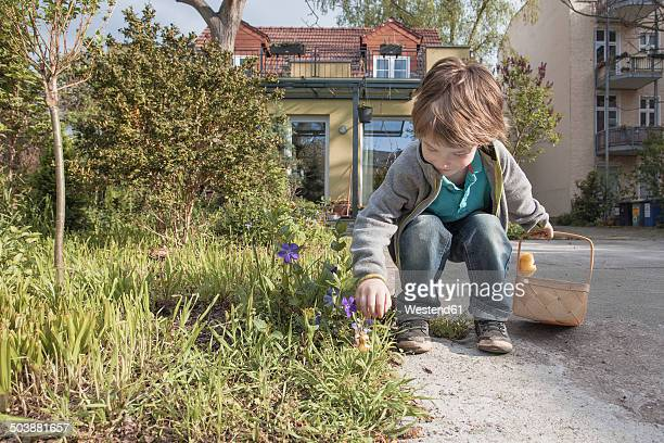 little boy with basket finding chocolate easter bunny - easter bunny stock pictures, royalty-free photos & images