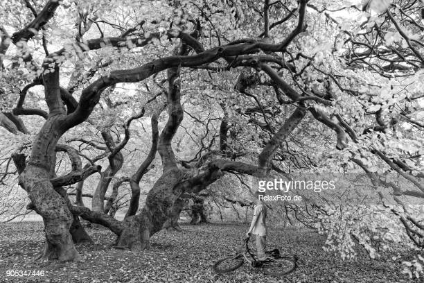 Little boy with bicyle standing under twisted beech trees
