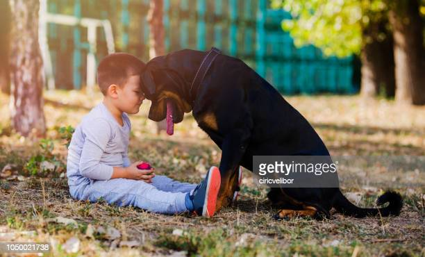 little boy with big dog - dedizione foto e immagini stock