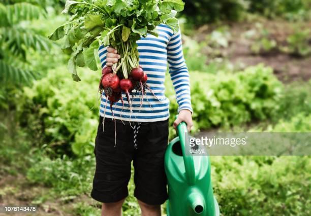 petit garçon avec radis frais sur une journée ensoleillée à la ferme - jardin potager photos et images de collection