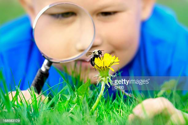 Little boy with magnifying glass and bee