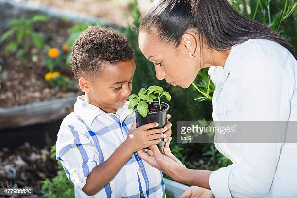 Little boy with madre sostiene plántula