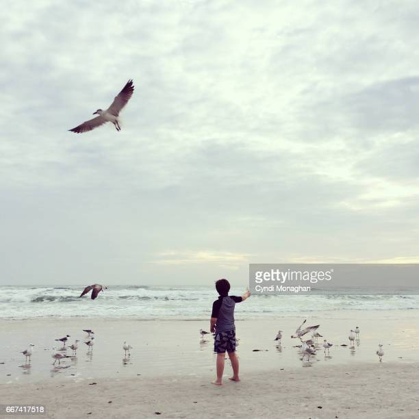 Little Boy with Seagulls
