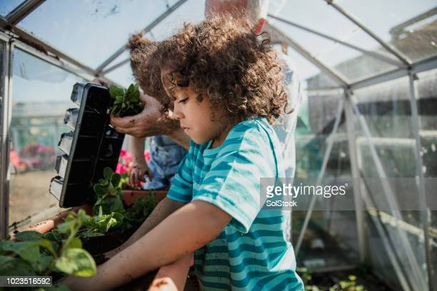 Little Boy Working in the Greenhouse