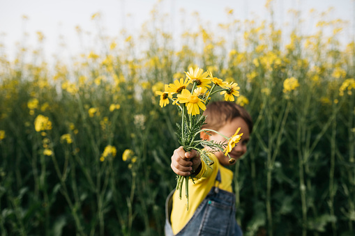 Little boy's hand holding picked yellow flowers in front of rape field - gettyimageskorea