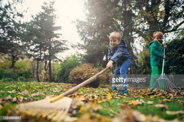 little boys having fun raking autumn leaves - young leafs stock photos and pictures