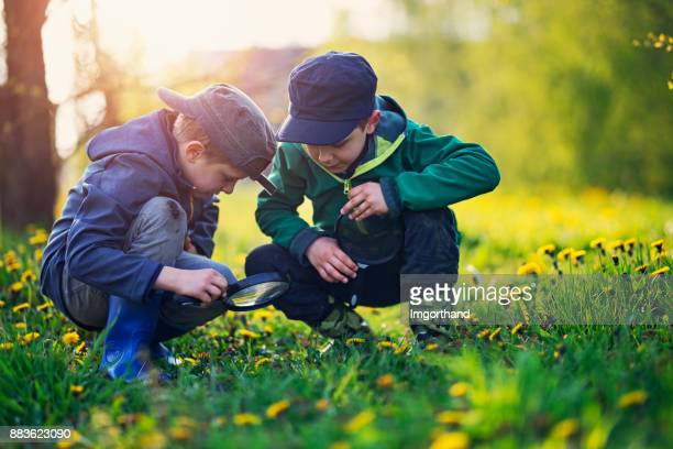 Little boys observing bugs in spring grass