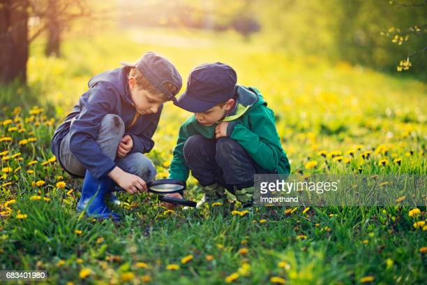 Little boys observing bugs