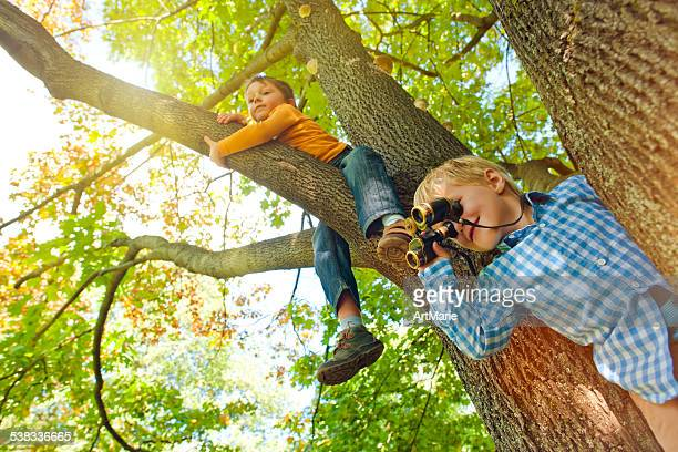 Little boys on a tree