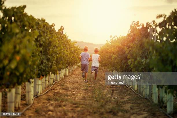 little boys running in vineyard - wine vineyard stock photos and pictures