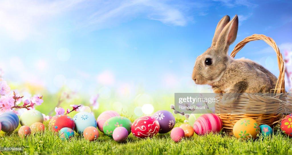 Kleines Häschen In Korb mit dekorierten Eiern - Osterkarte : Stock-Foto