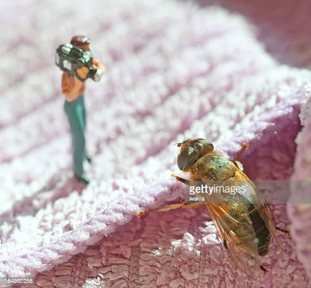Poco hombre con cámara de insectos
