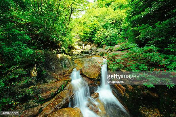 little cascade yakushima - 鹿児島県 ストックフォトと画像