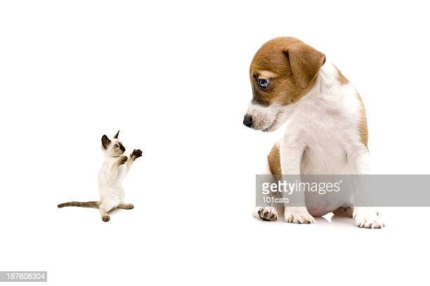 little cat and dog - jack russell terrier bildbanksfoton och bilder