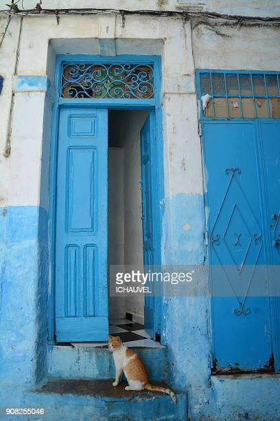 little cat larache morocco - tetouan stock photos and pictures