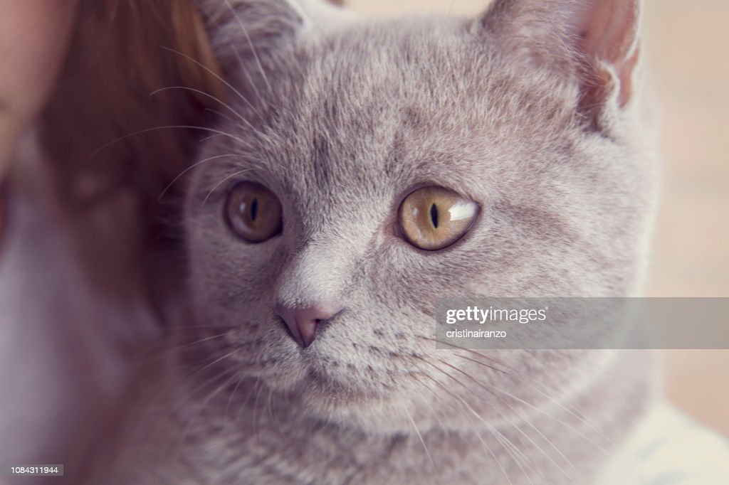 Little cat : Stock Photo