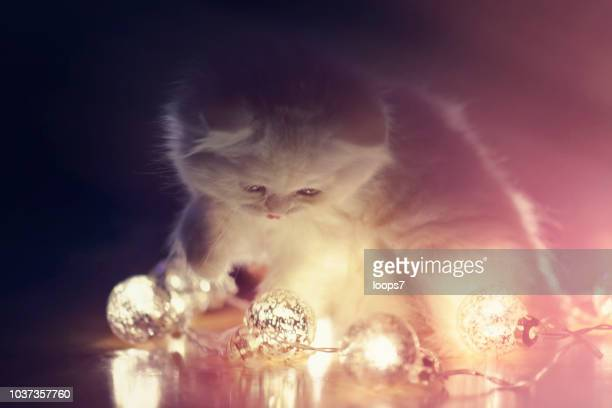 little cat playing with christmas lights - christmas kittens stock pictures, royalty-free photos & images
