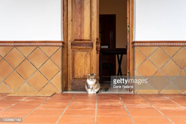 little cat sitting in front of a wooden entrance door on a red, tiled floor - dorte fjalland stock pictures, royalty-free photos & images