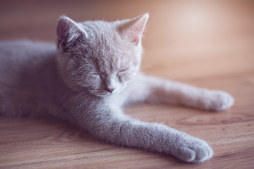 Little cat sleeping - gettyimageskorea
