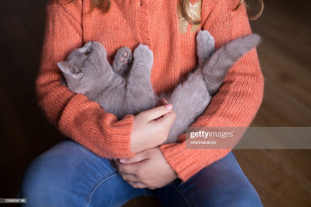 Little cat with girl : Stock Photo