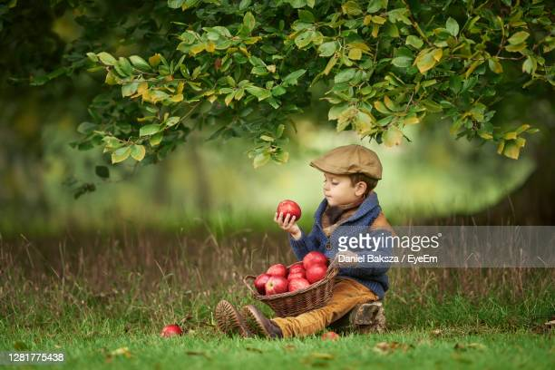 little caucasian boy is sitting in the grass under a tree with a basket full of apples - crop stock pictures, royalty-free photos & images