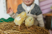 http://www.istockphoto.com/photo/little-chicks-on-the-hay-in-traditional-ukrainian-interior-on-blurred-baby-silhouette-gm934878536-255896343