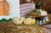 http://www.istockphoto.com/photo/little-chicks-on-the-hay-in-traditional-ukrainian-interior-gm934878600-255896365