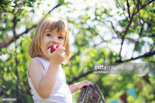 little child picking peaches - peach stock photos and pictures