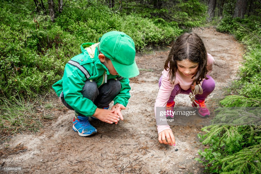 Little children boy and girl sitting on forest ground exploring and learning about nature and insects. Looking at a black bug. : Stock Photo
