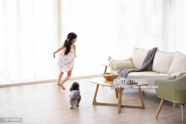 little chinese girl playing with dog in living room - 追いかける ストックフォトと画像