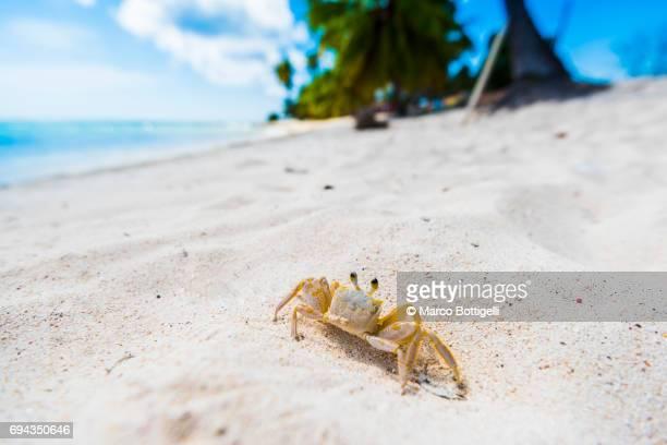 Little Crab on a tropical beach.
