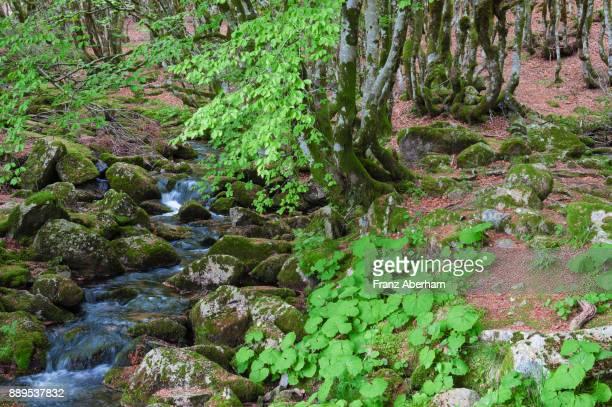 Little creek in forest, summer time in Cèvennes National Park, Gard, France