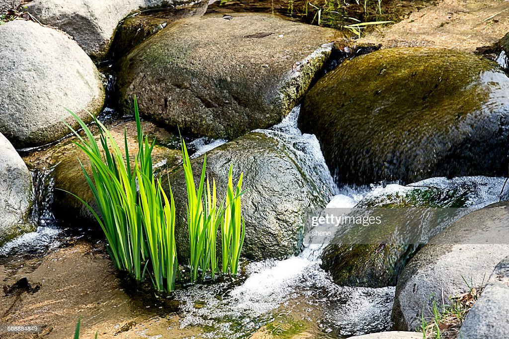 Little Creek in Seoul Forest Park : Stock Photo