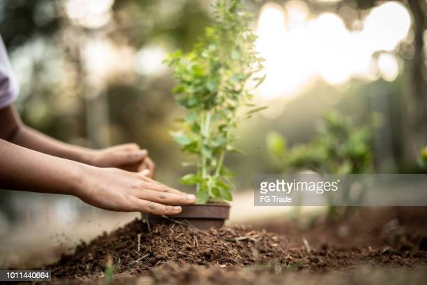 little cute girl planting young tree on black soil as save world concept - attitude stock pictures, royalty-free photos & images
