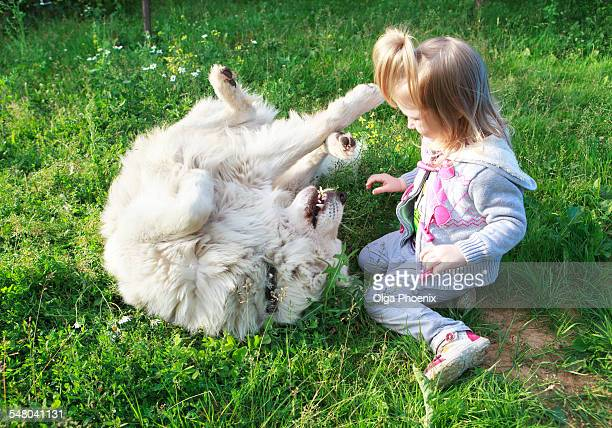little cute girl playing with her white shepherd - pastore maremmano foto e immagini stock
