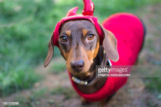 little devil costume - devil costume stockfoto's en -beelden