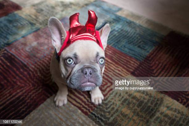 little devil - devil costume stock photos and pictures