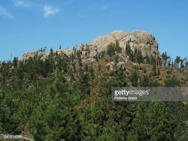 little devils tower, custer state park - pinnacle rock formation stock-fotos und bilder