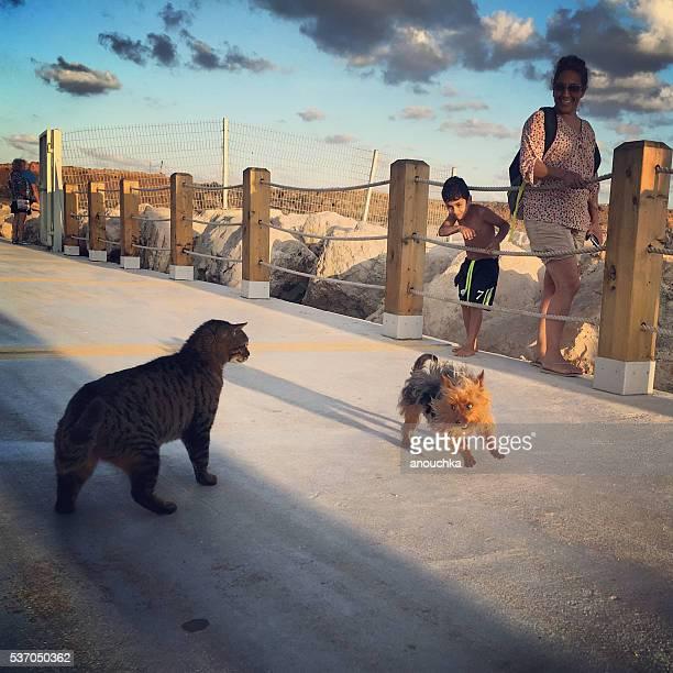 Little dog attacking cat on Herzliya Marina Promenade