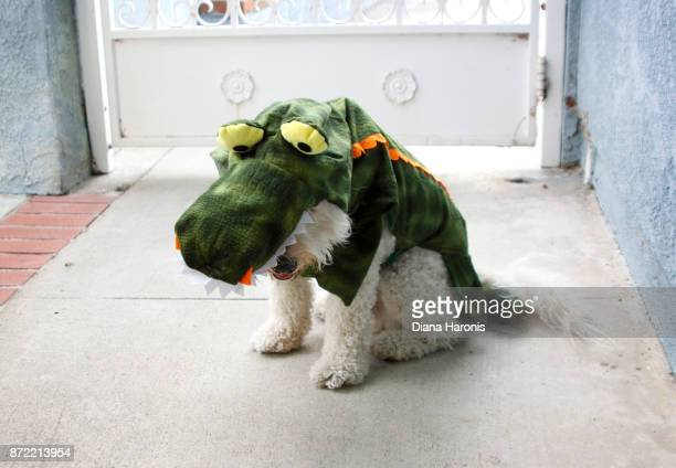 A little dog is wearing a funny dinosaur costume.
