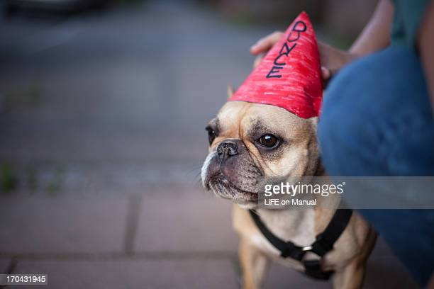 little dunce dog - dunce cap stock pictures, royalty-free photos & images