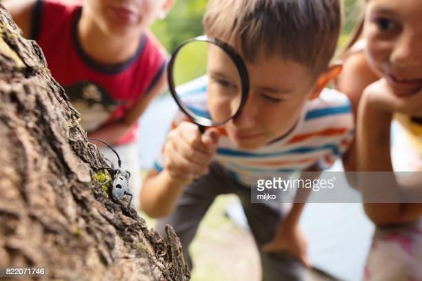 Little explorers in nature