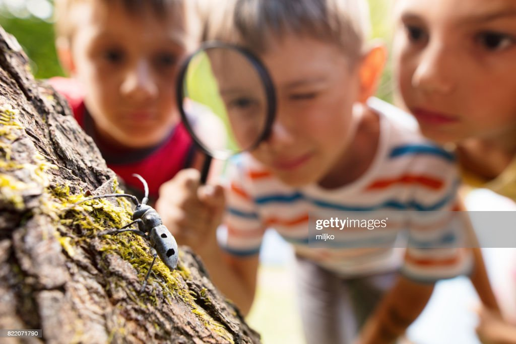 Little explorers in nature : Stock Photo
