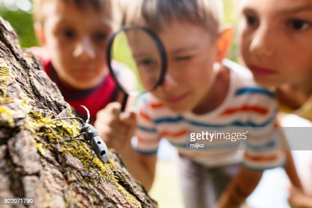 little explorers in nature - insect stock pictures, royalty-free photos & images