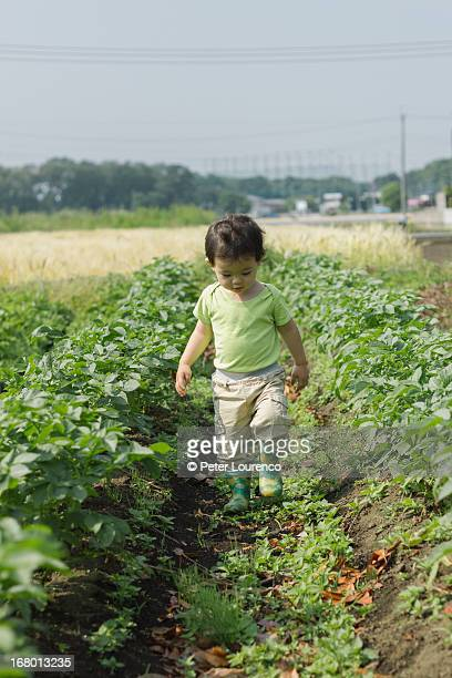little farmer - peter lourenco stock pictures, royalty-free photos & images