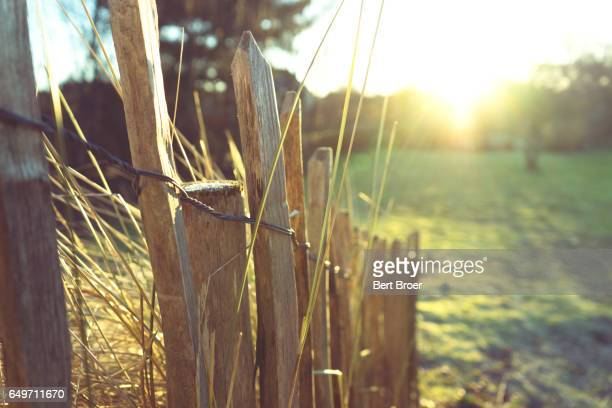 A little fence in the evening sun
