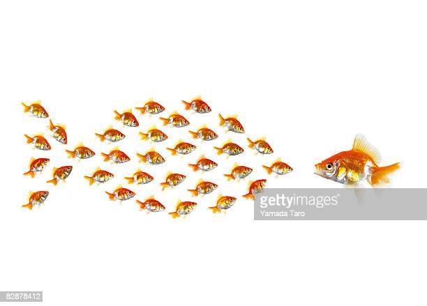 Little fish form a big fish meeting a fish.