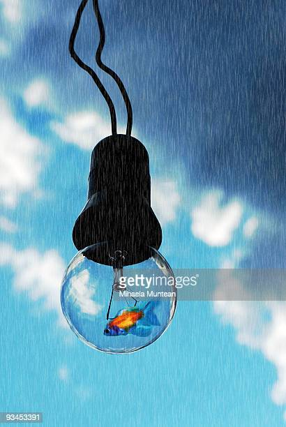 Little fish swimming in a bulb